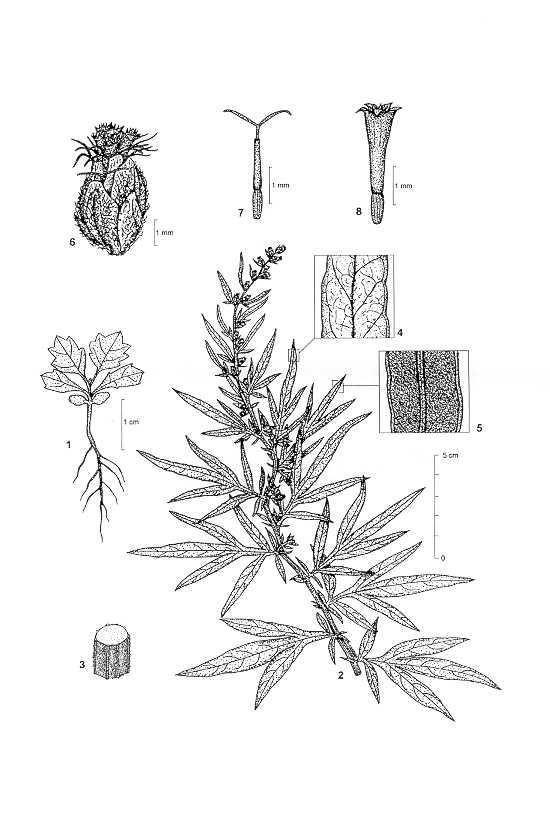 Idao Species Search